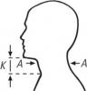 Blick geradeaus, A= Halsumfang: K=Kinnhöhe