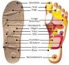 Reflexzonen-Massage durch FinnComfort Reflexxzonenfussbett